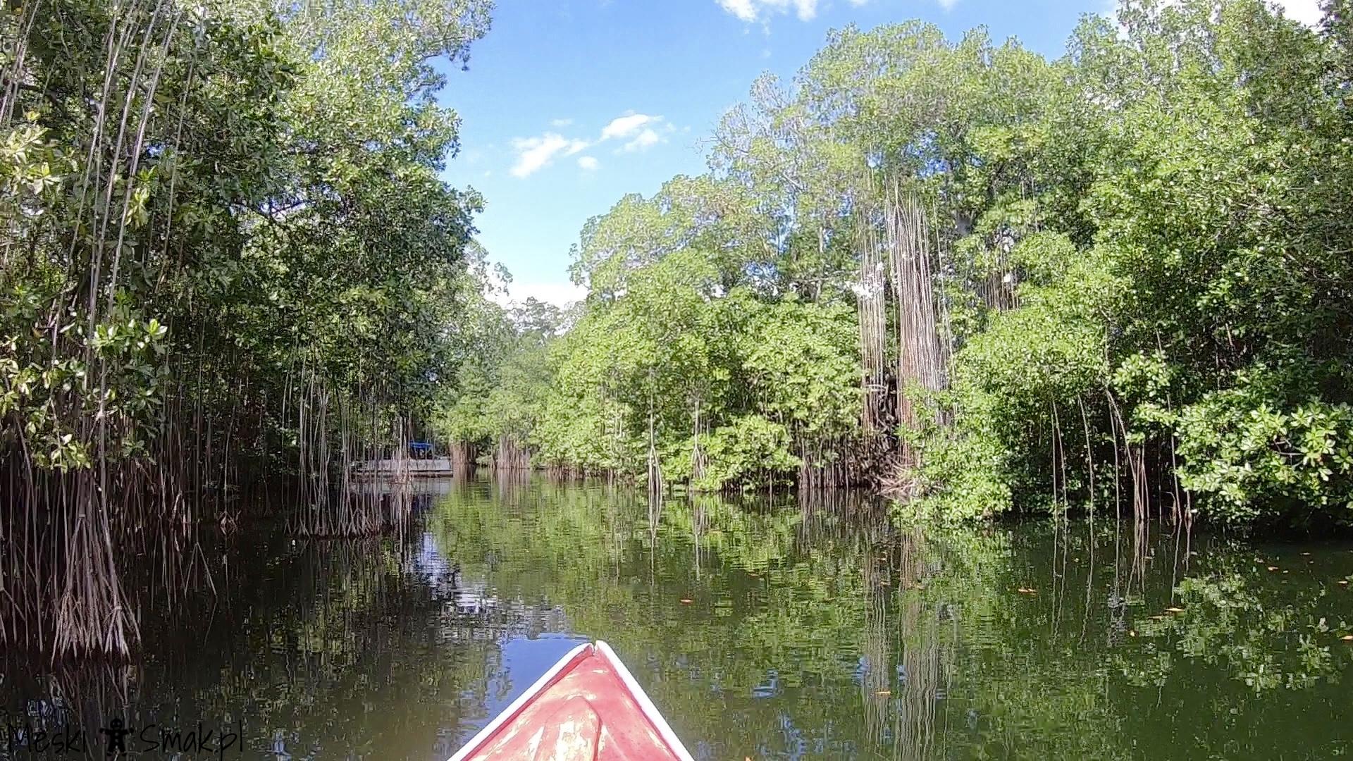 Black River Safari 5