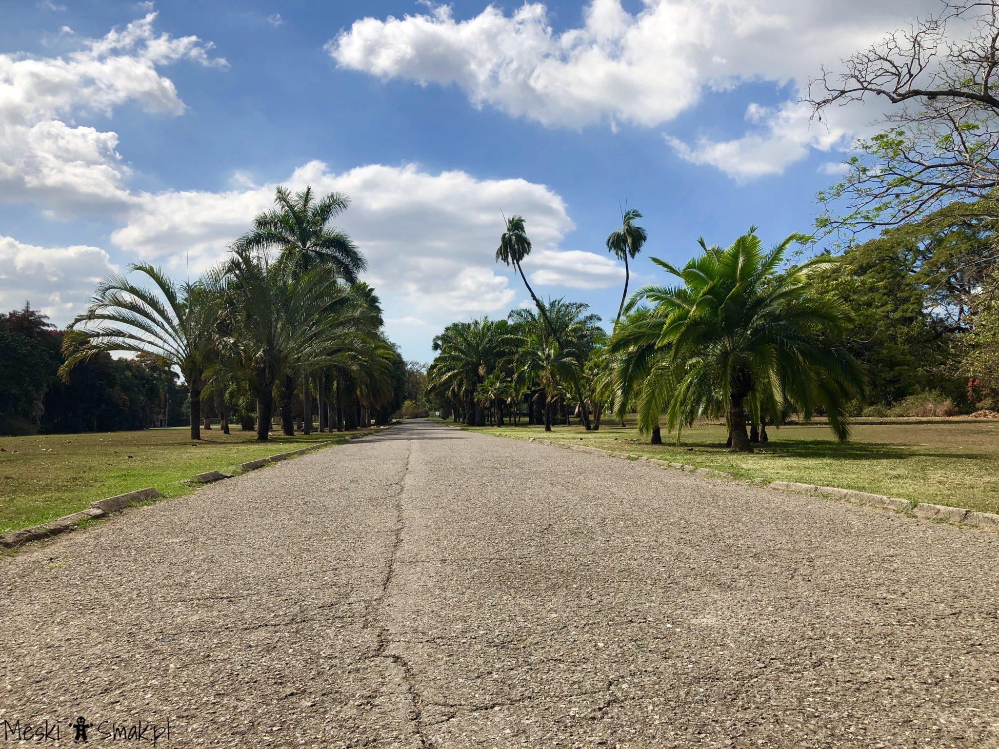jamajka na własną rękę_Hope Gardens 3