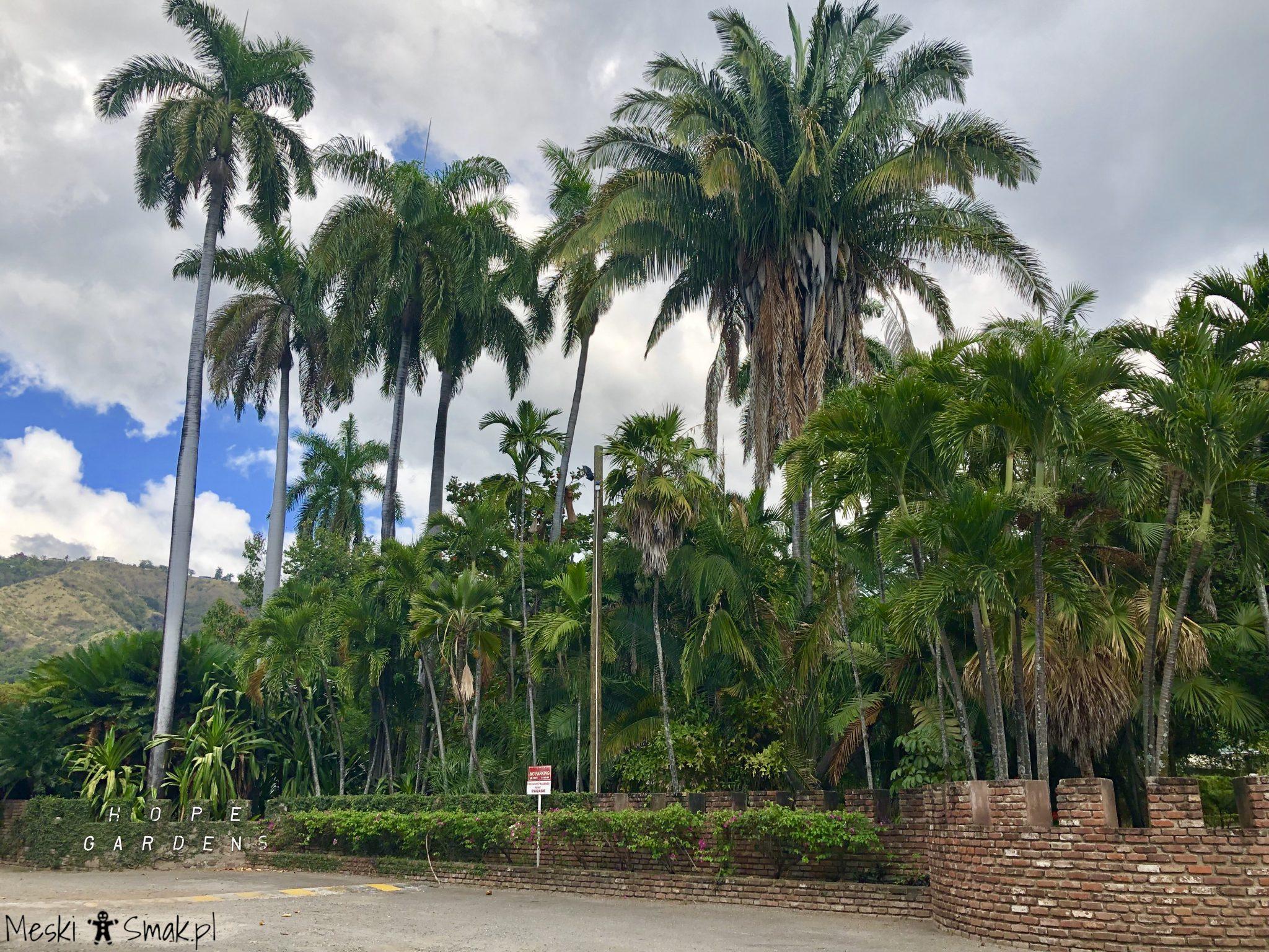 jamajka na własną rękę_Hope Gardens