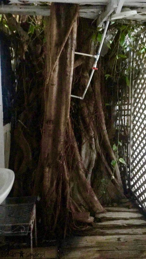 podróż poślubna_Naturalny jamajski prysznic_Męski Smak