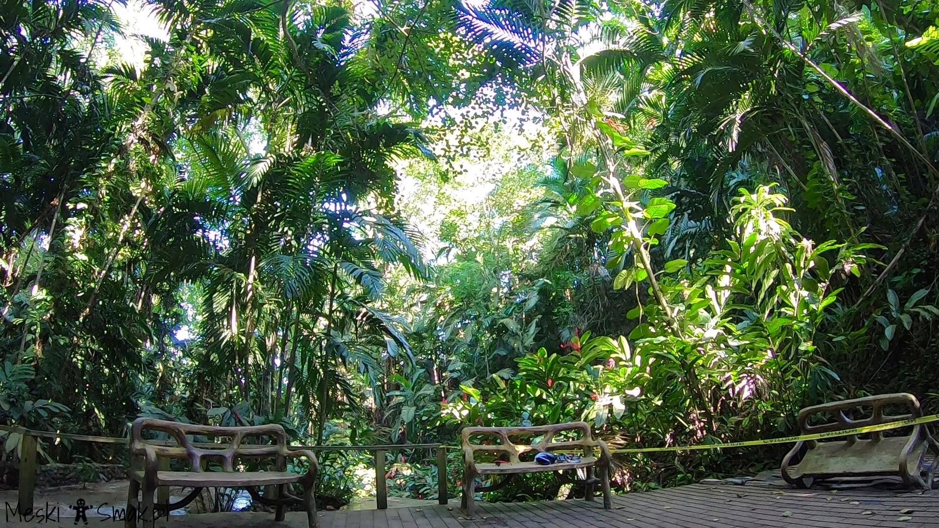 jamajka_The Turtle River Falls & Gardens 2