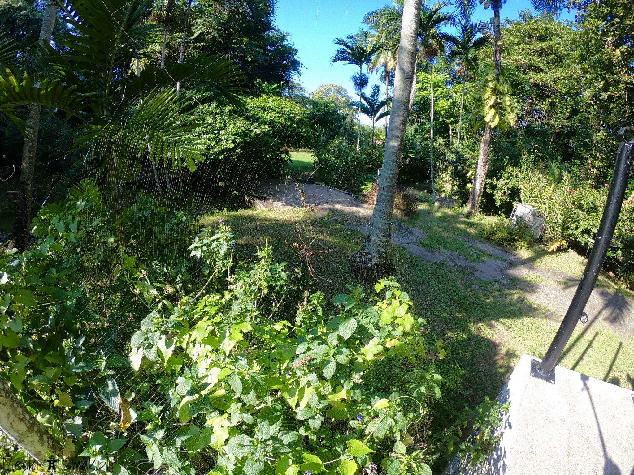jamaica_The Turtle River Falls & Gardens 6