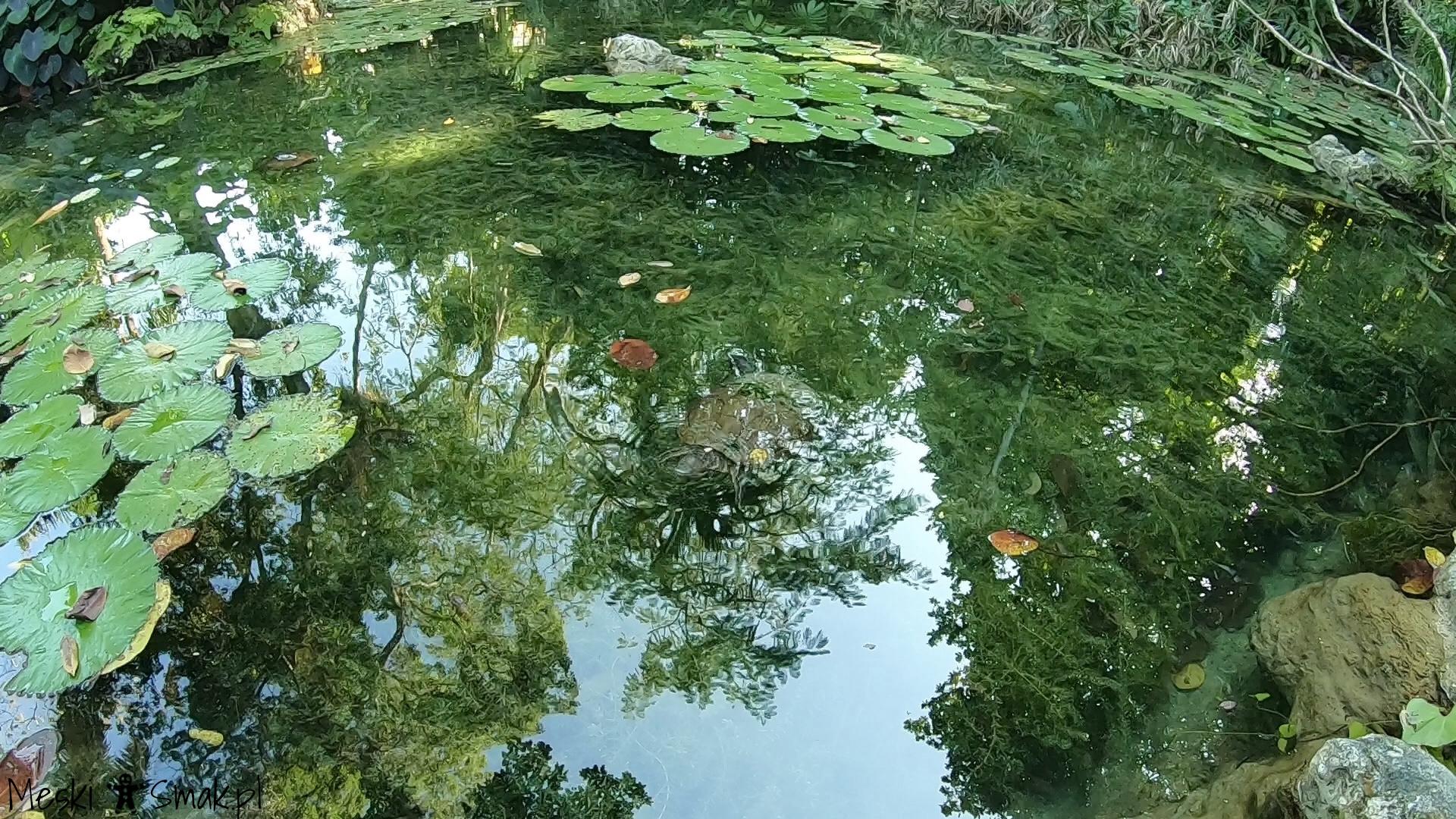 podróż poślubna_The Turtle River Falls & Gardens 7