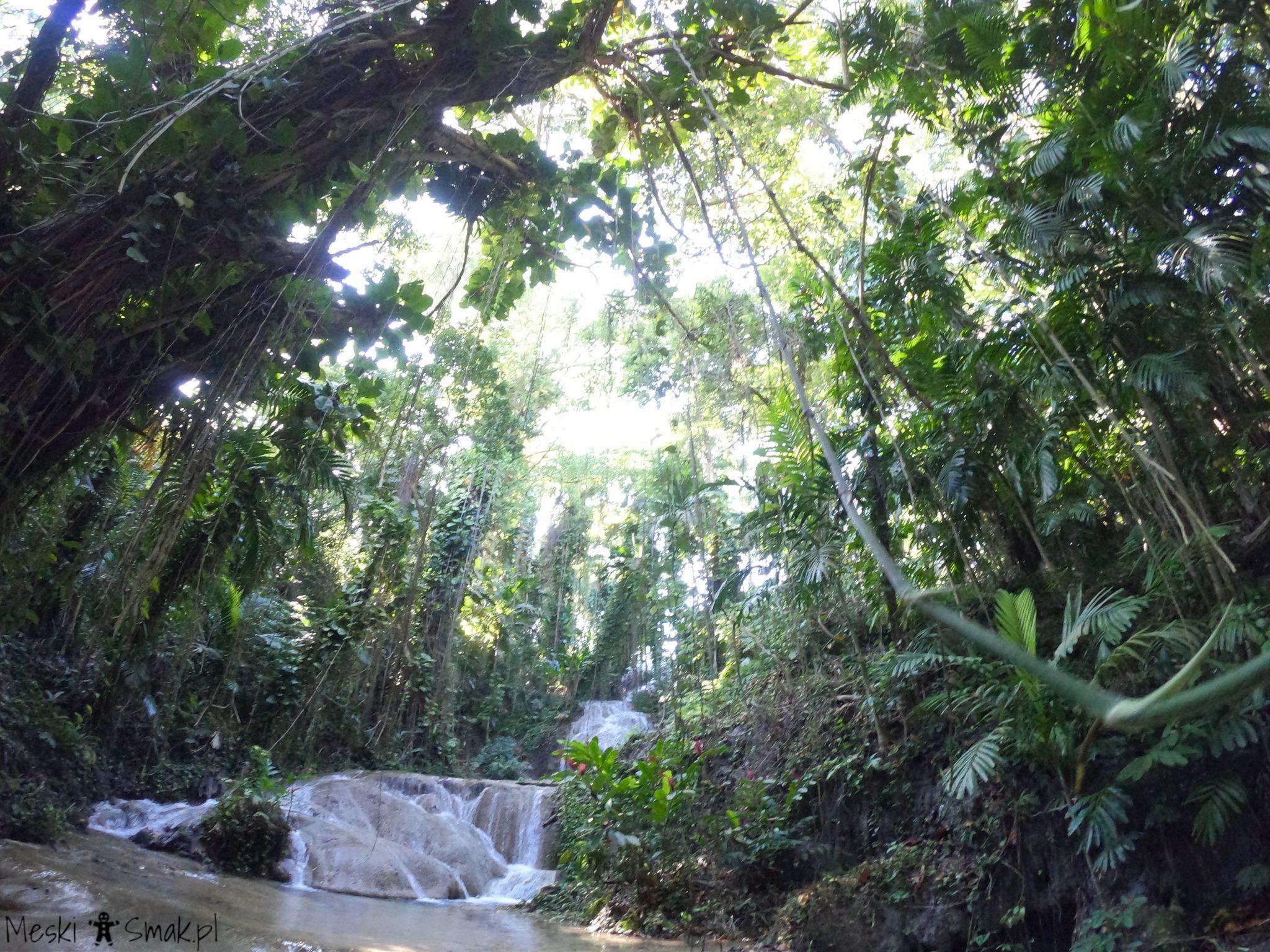 Turtle River Falls & Gardens 15