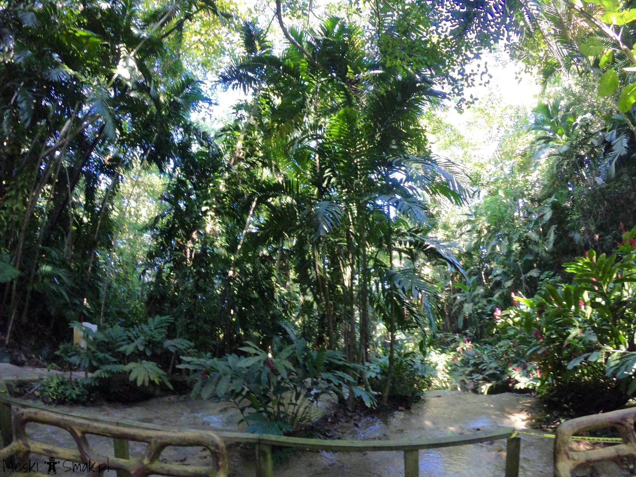 Turtle River Falls & Gardens 18