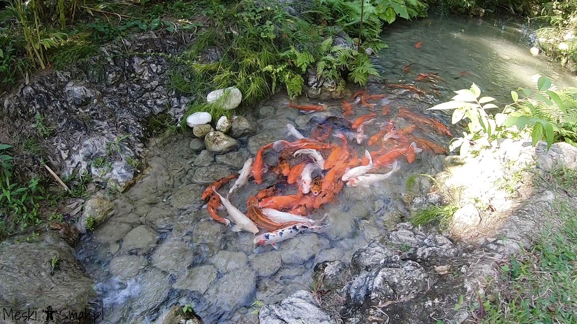 Turtle River Falls & Gardens 21