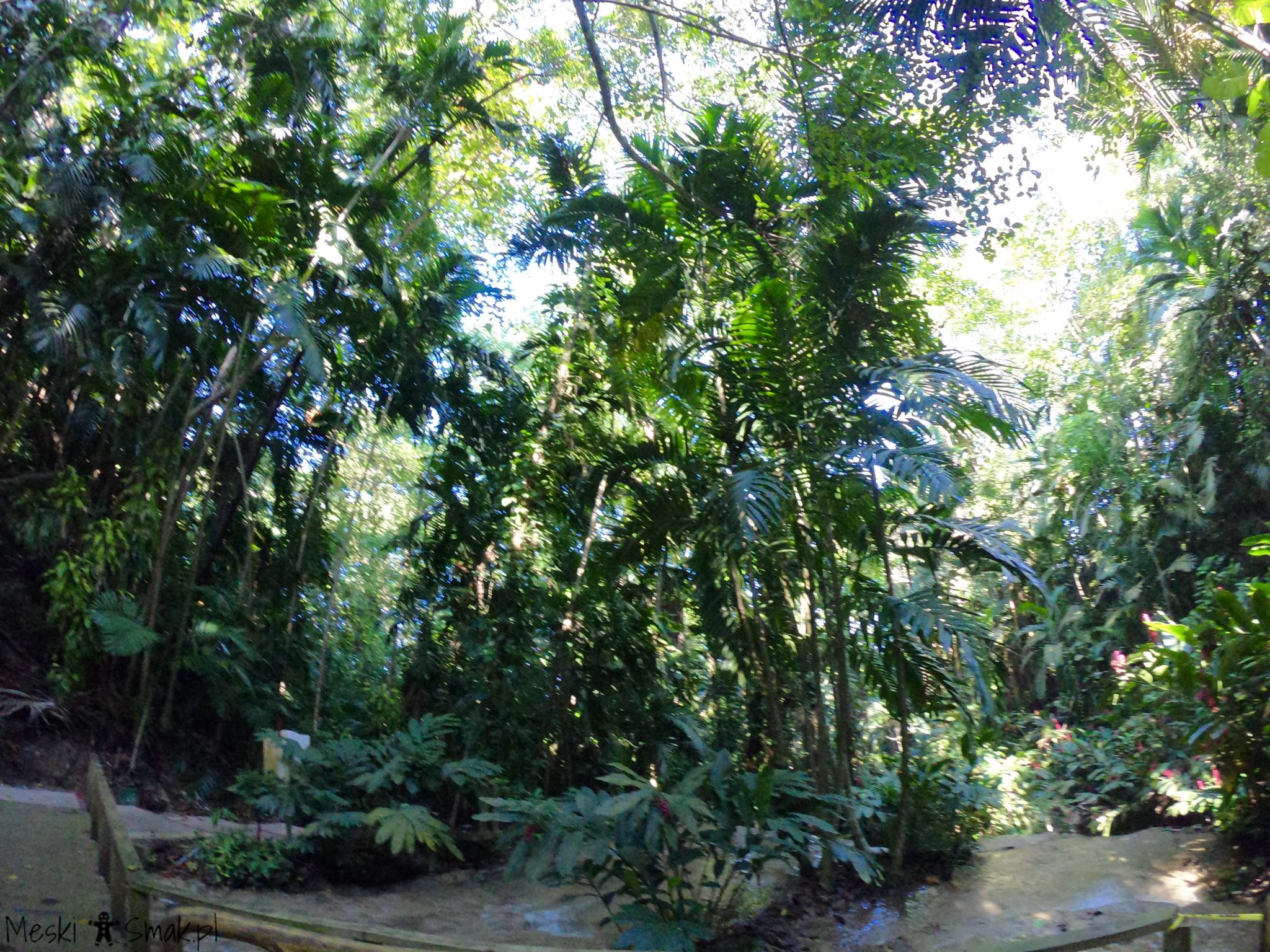 Wakacje i wycieczki Jamajka_The Turtle River Falls & Gardens 11