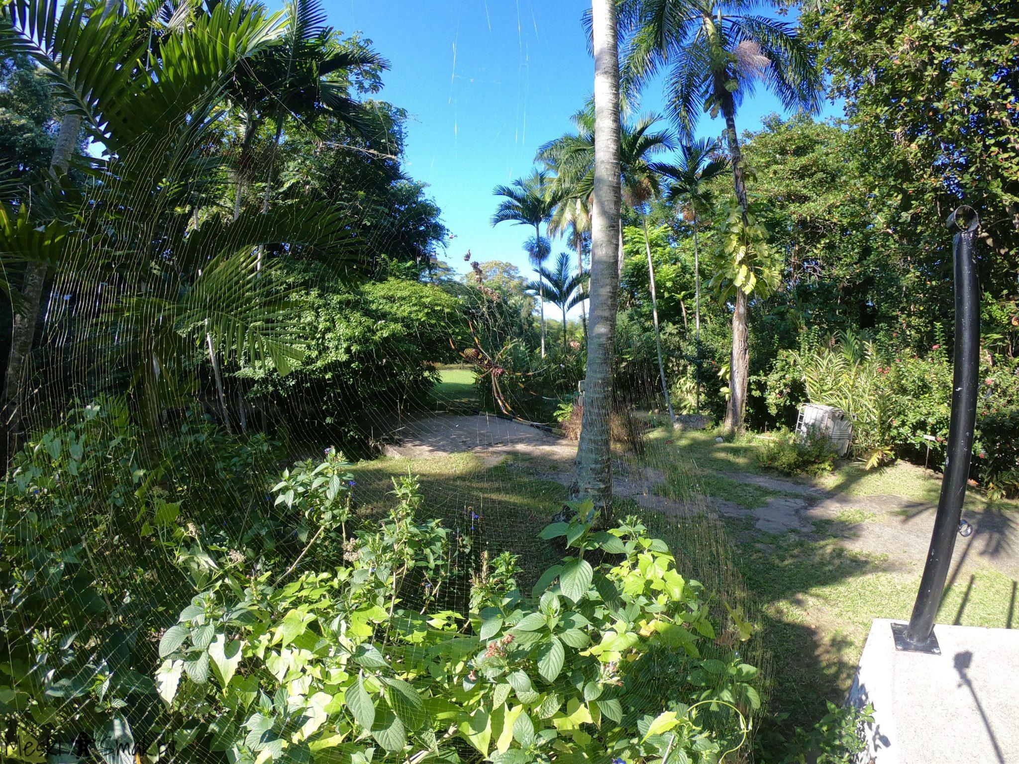 Wakacje i wycieczki Jamajka_The Turtle River Falls & Gardens 22