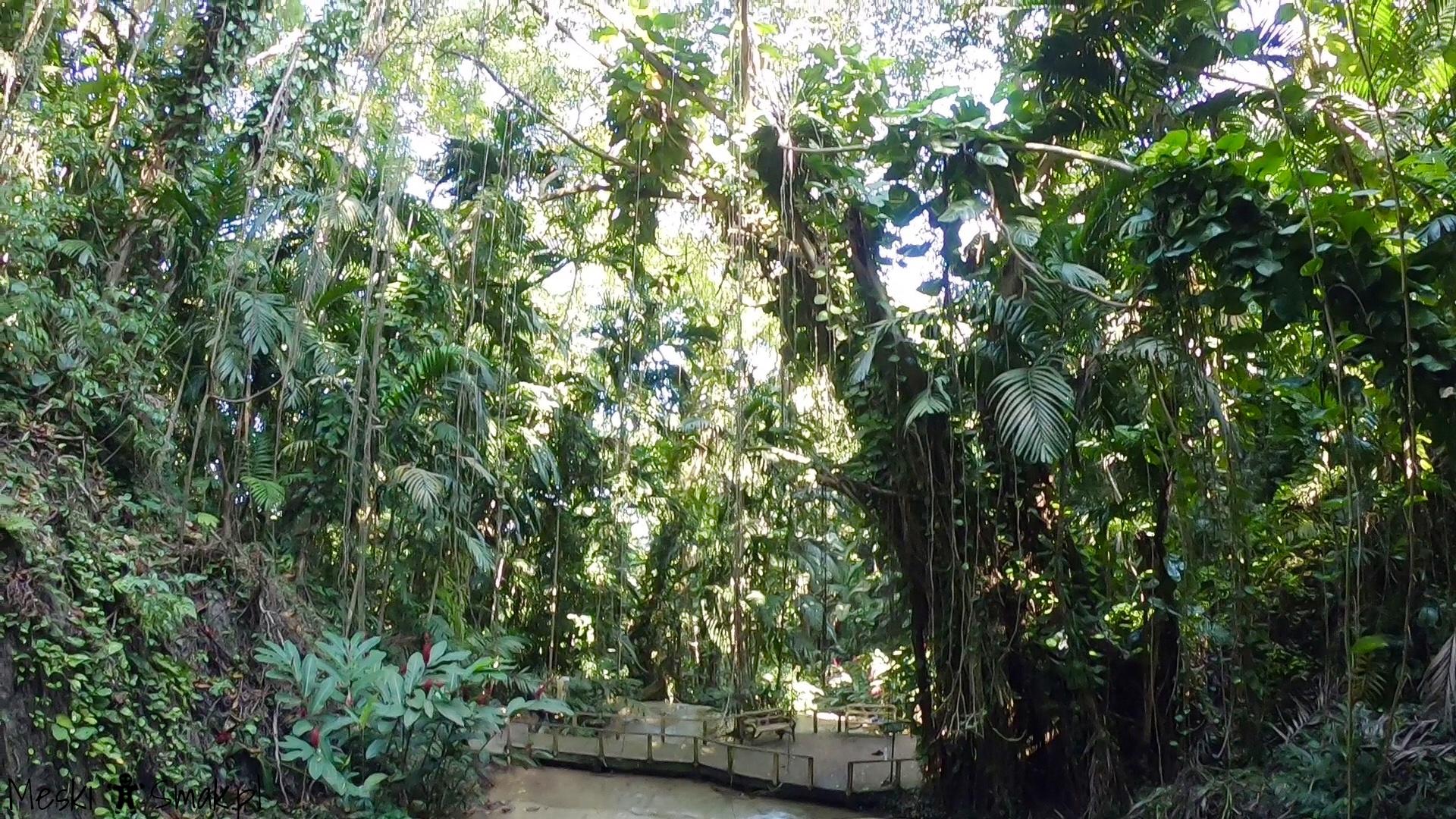 Wakacje i wycieczki Jamajka_The Turtle River Falls & Gardens 4