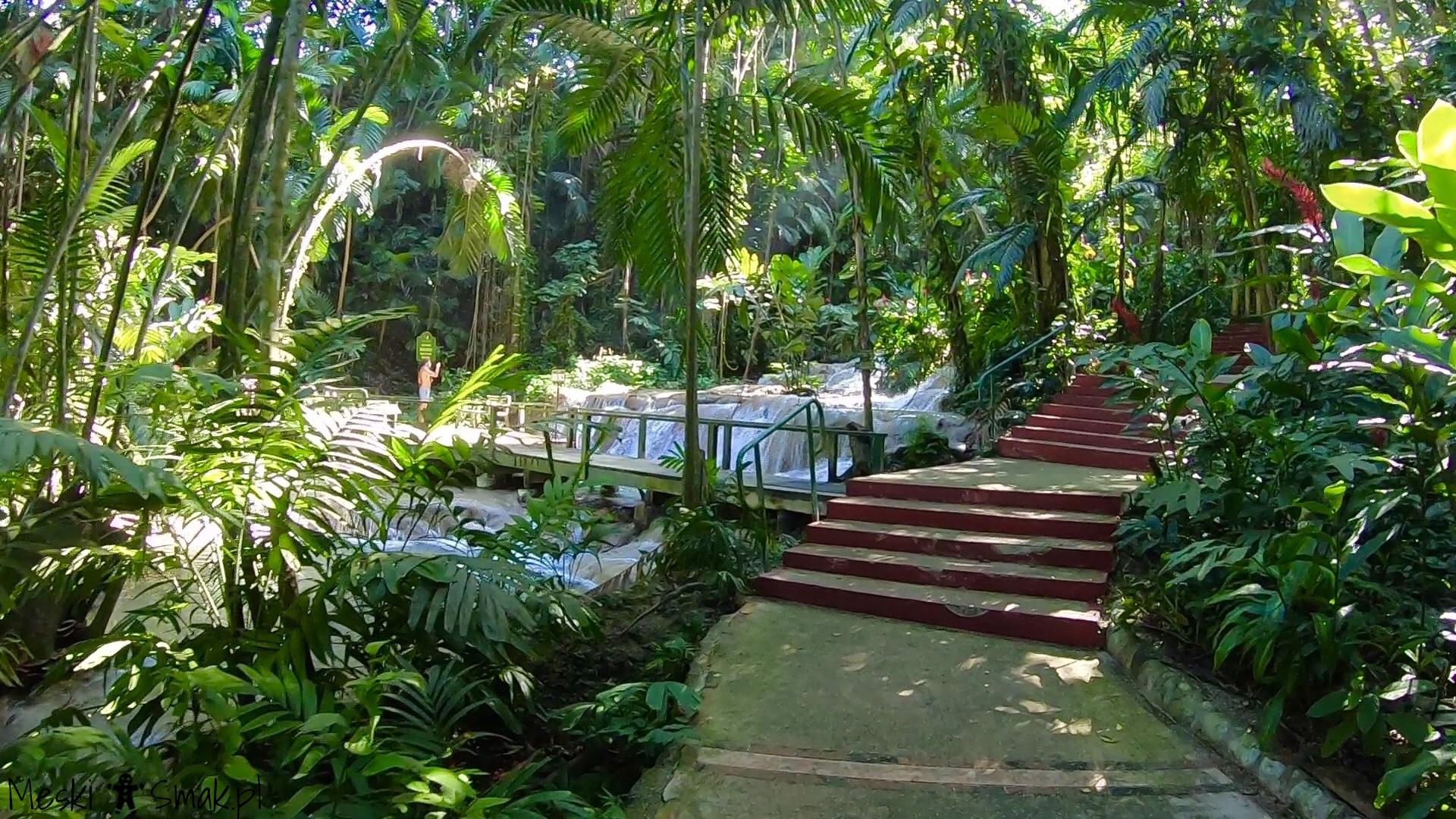 Wakacje i wycieczki Jamajka_The Turtle River Falls & Gardens 8