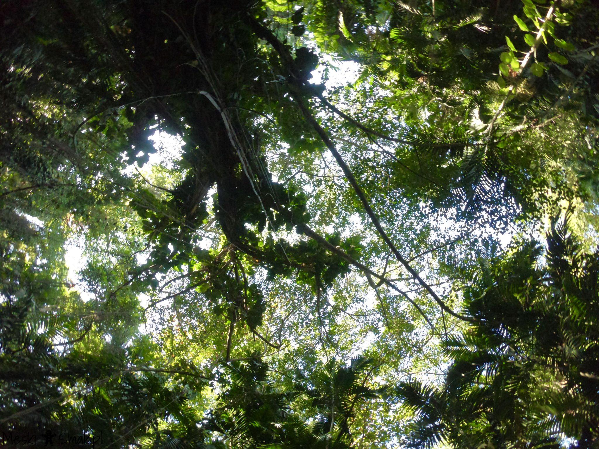 Wakacje i wycieczki Jamajka_The Turtle River Falls & Gardens 9