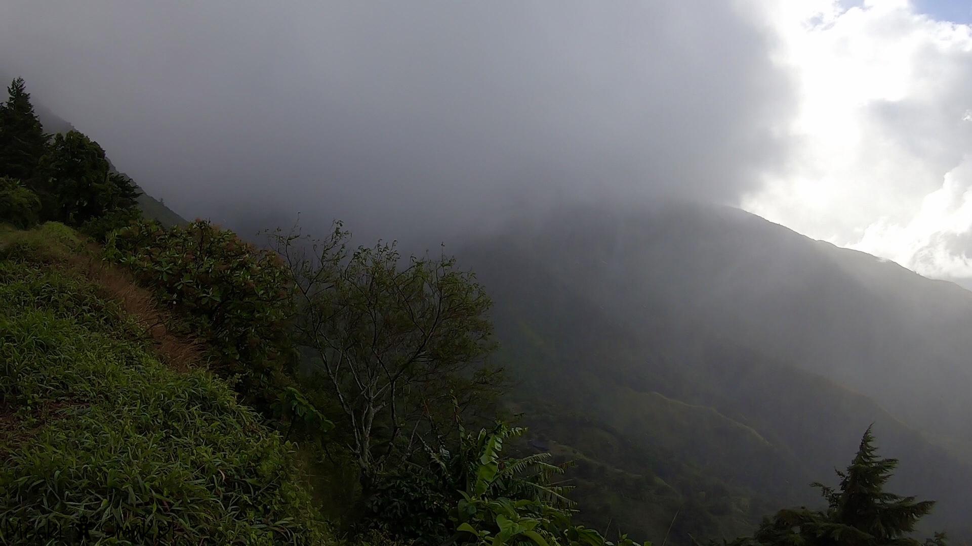 Wakacje i wycieczki Jamajka_wszystko o Góry Błękitne Blue Mountains 10