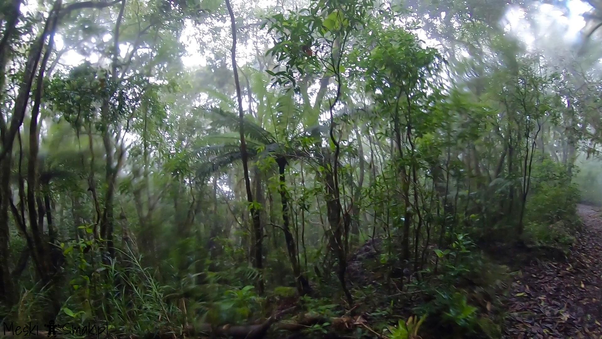 Wakacje i wycieczki Jamajka_wszystko o Góry Błękitne Blue Mountains 13