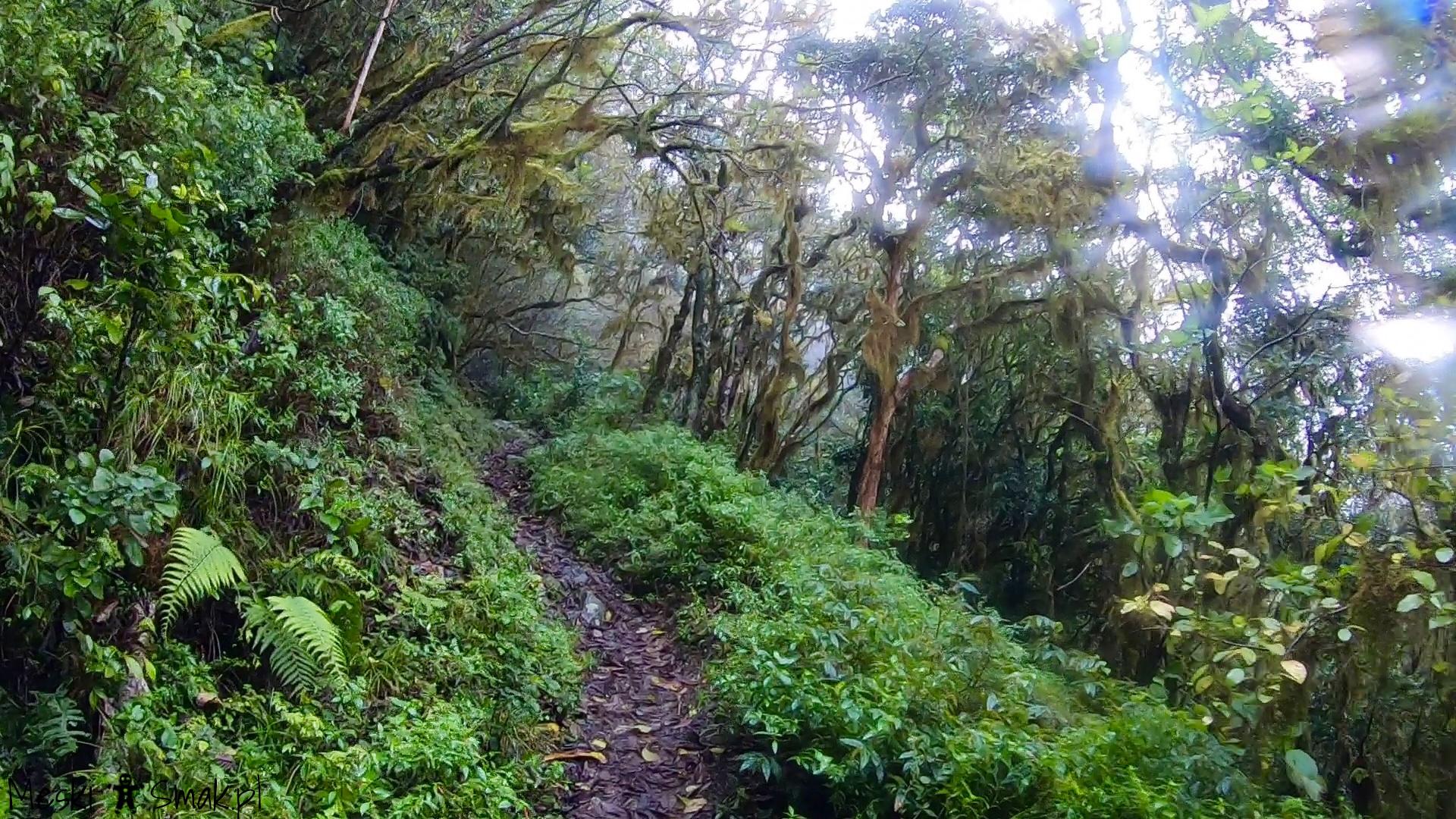 Wakacje i wycieczki Jamajka_wszystko o Góry Błękitne Blue Mountains 14