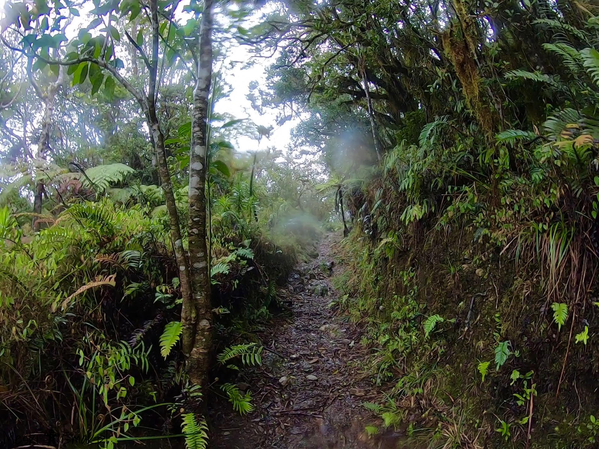 Wakacje i wycieczki Jamajka_wszystko o Góry Błękitne Blue Mountains 16