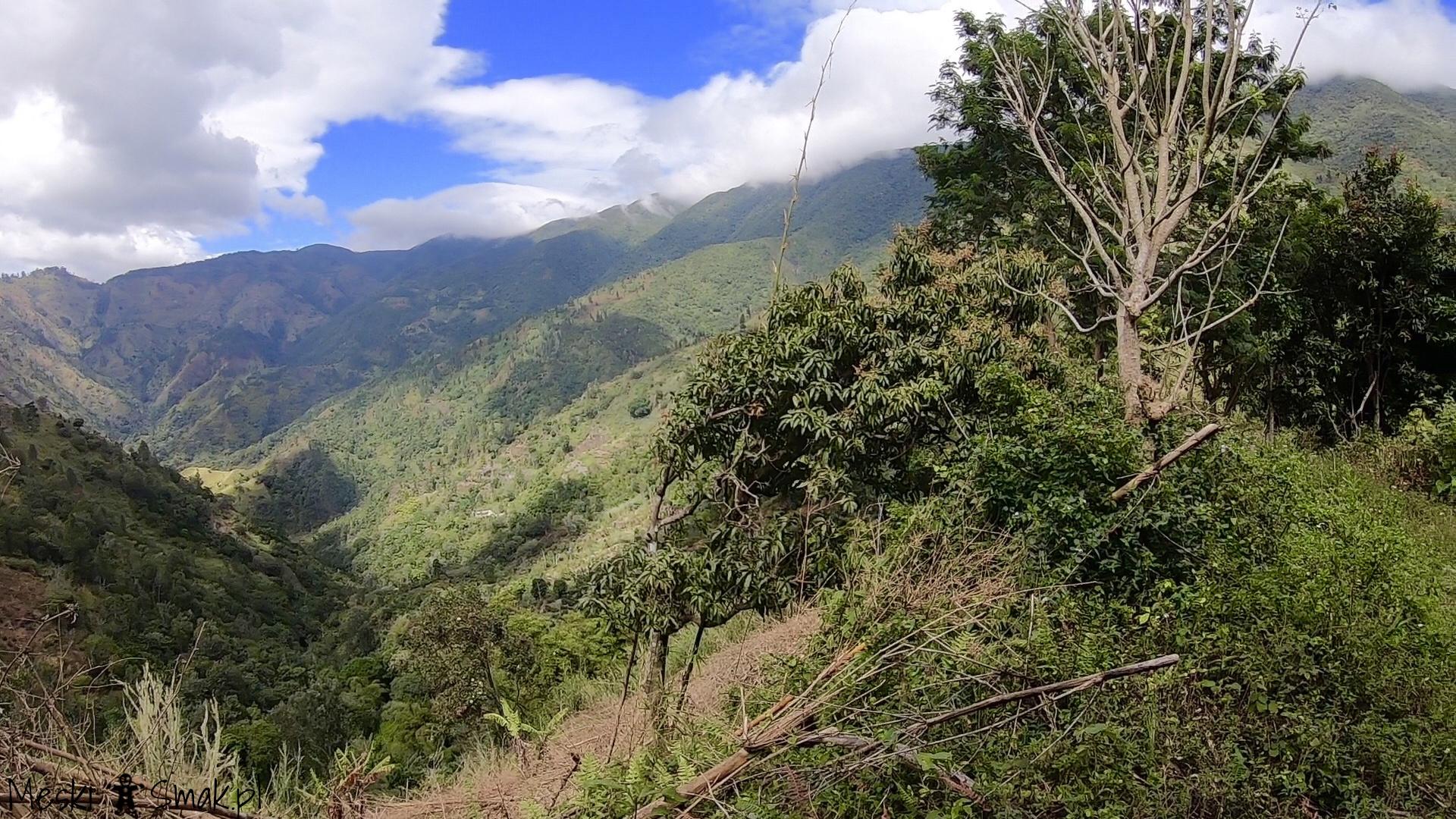 Wakacje i wycieczki Jamajka_wszystko o Góry Błękitne Blue Mountains 19