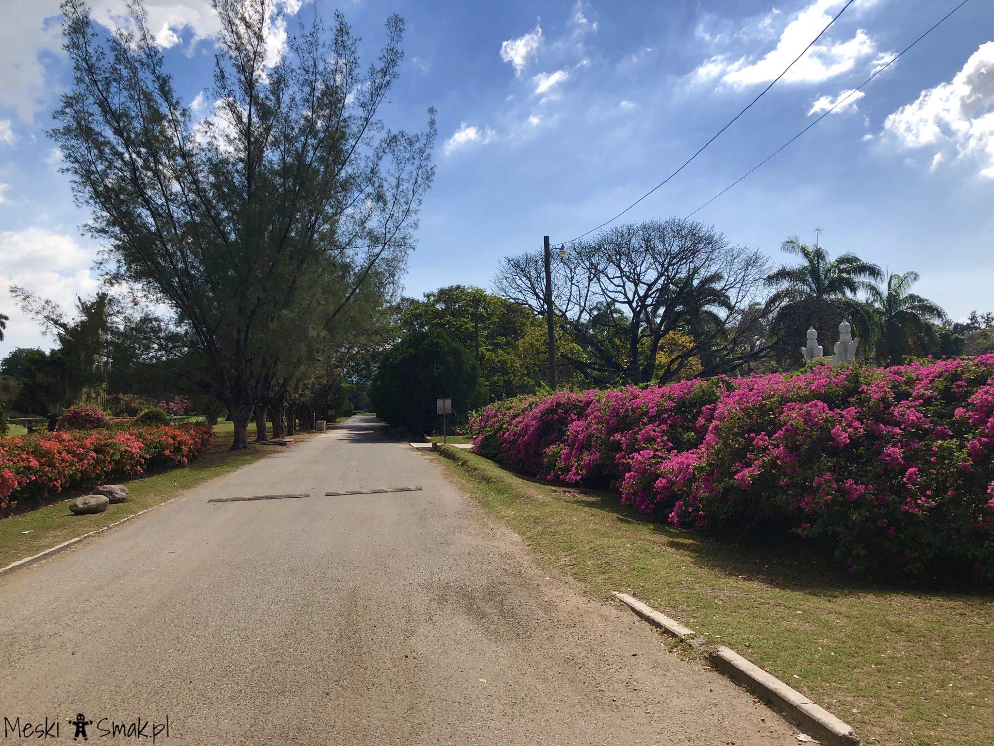 Wakacje i wycieczki Jamajka_wszystko o ogrodach Hope Gardens 10