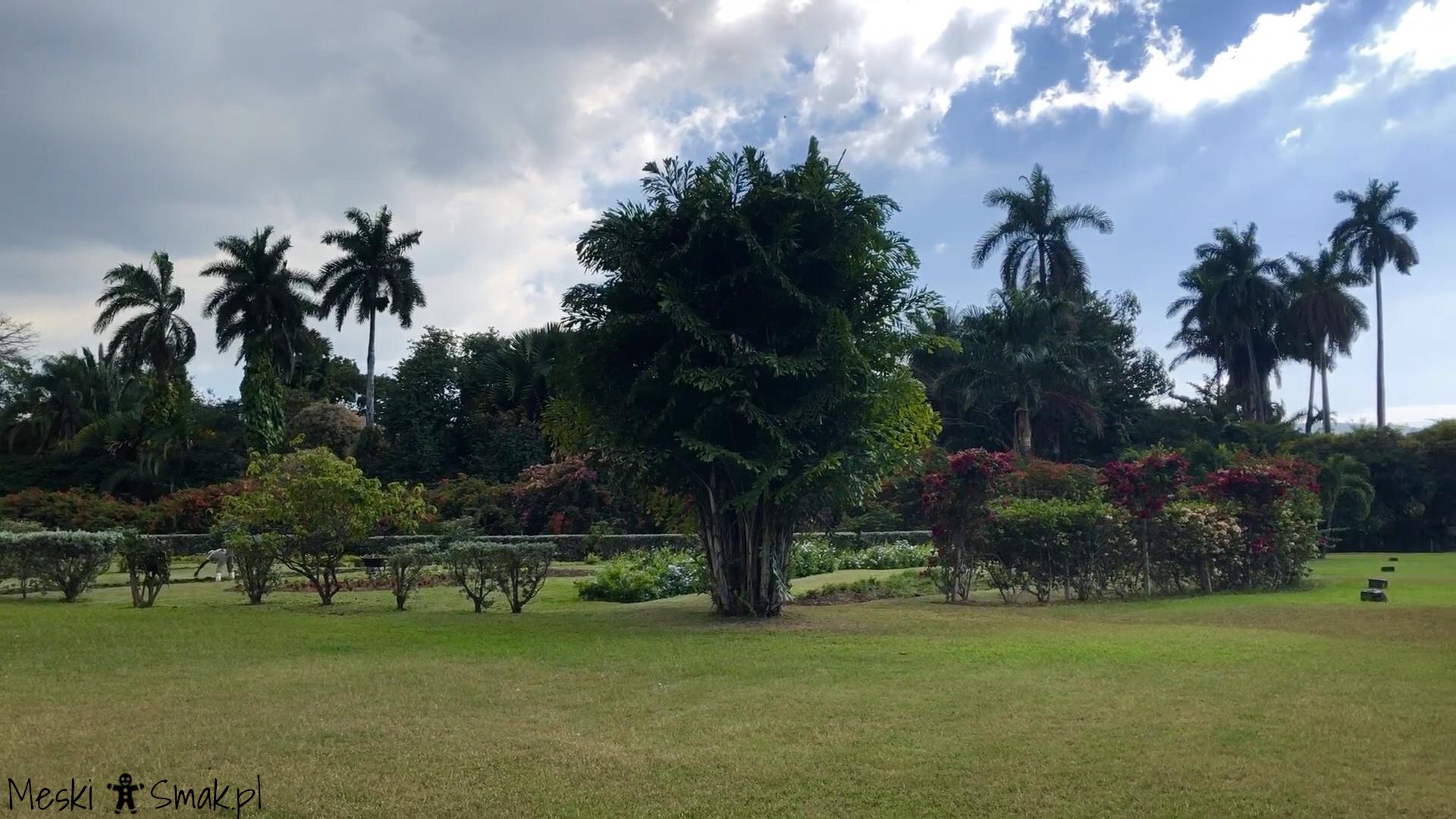 Wakacje i wycieczki Jamajka_wszystko o ogrodach Hope Gardens 11