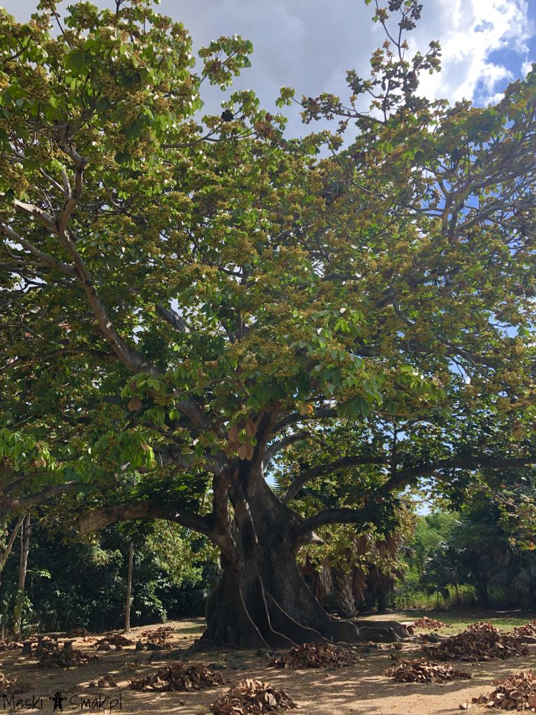 Wakacje i wycieczki Jamajka_wszystko o ogrodach Hope Gardens 2