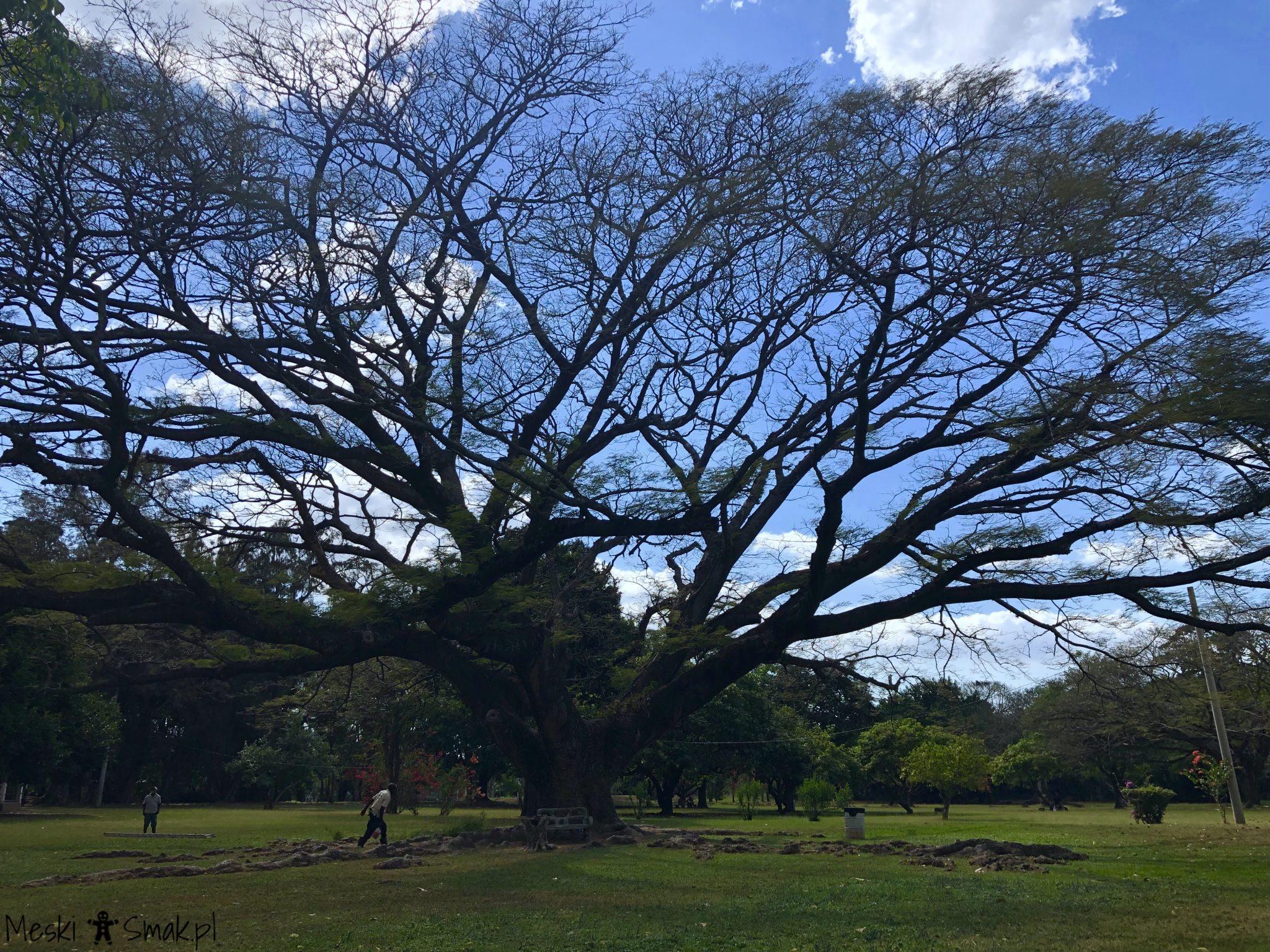 Wakacje i wycieczki Jamajka_wszystko o ogrodach Hope Gardens 7