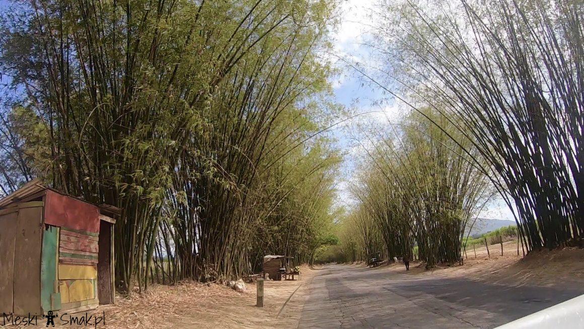 Wakacje i wycieczki Jamajka_aleja bambusowa Bamboo Avenue