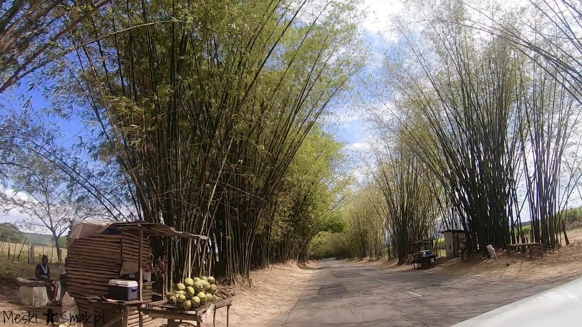 Wakacje i wycieczki Jamajka_aleja bambusowa Bamboo Avenue 2
