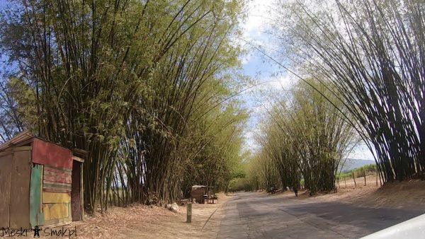 Wakacje i wycieczki Jamajka: aleja bambusowa Bamboo Avenue