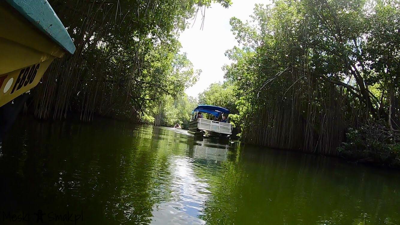 Wakacje i wycieczki Jamajka_wszystko o Black River Safari 13