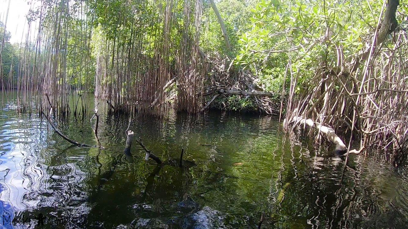 Wakacje i wycieczki Jamajka_wszystko o Black River Safari 14