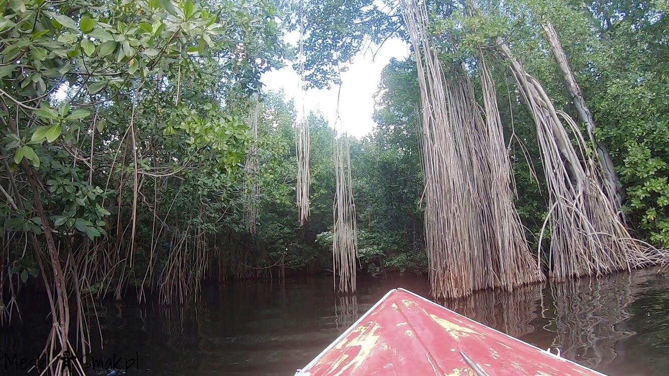 Wakacje i wycieczki Jamajka_wszystko o Black River Safari 16