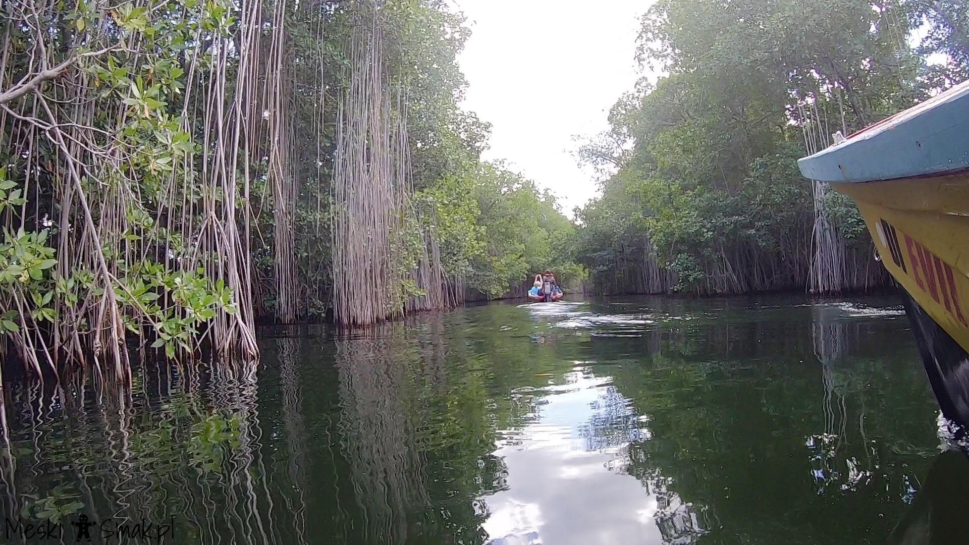 Wakacje i wycieczki Jamajka_wszystko o Black River Safari 7
