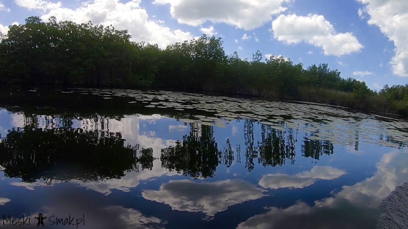 Wakacje i wycieczki Jamajka_wszystko o Black River Safari 8