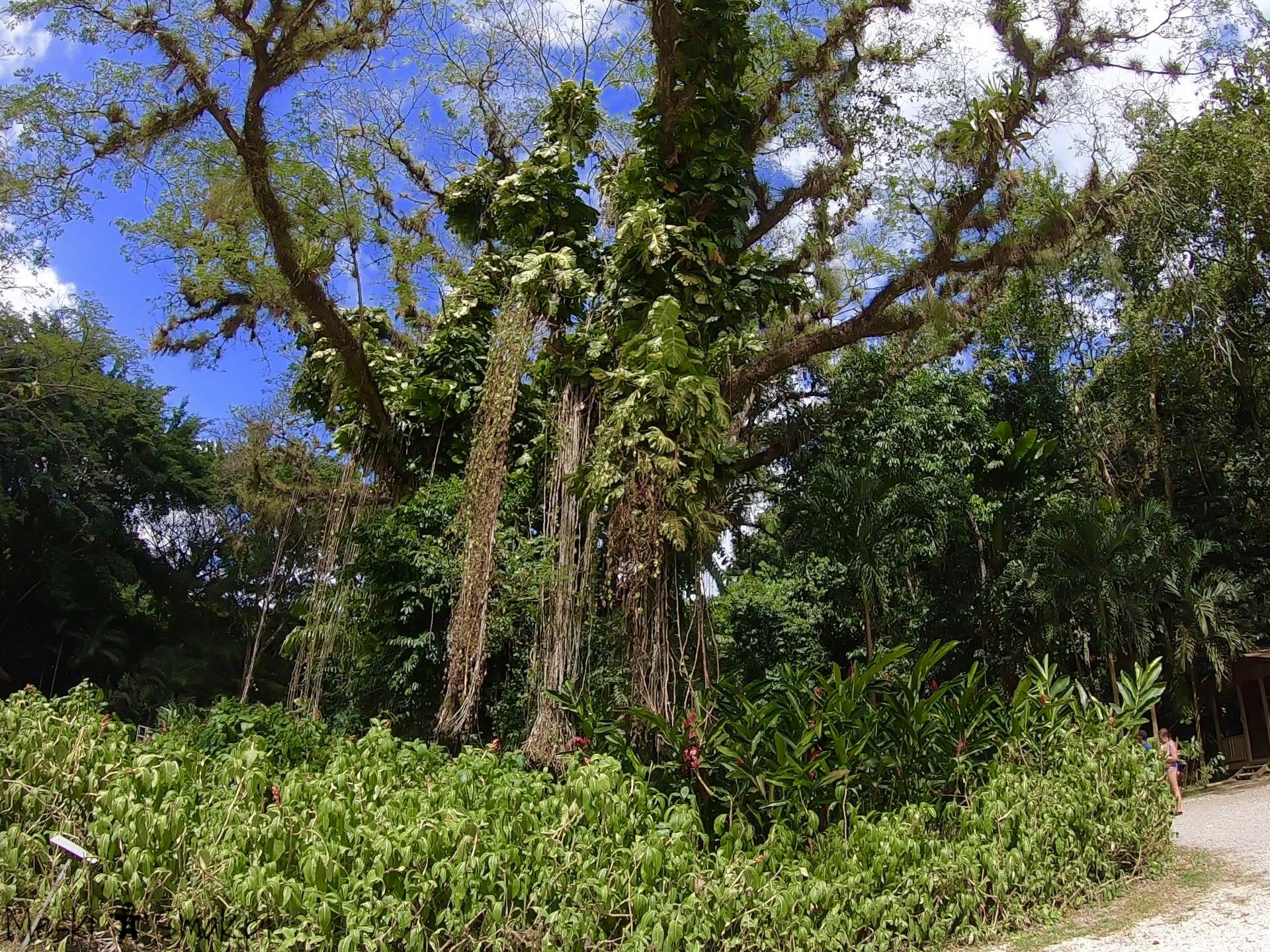 Wakacje i wycieczki Jamajka_wszystko o wodospady YS Falls 10