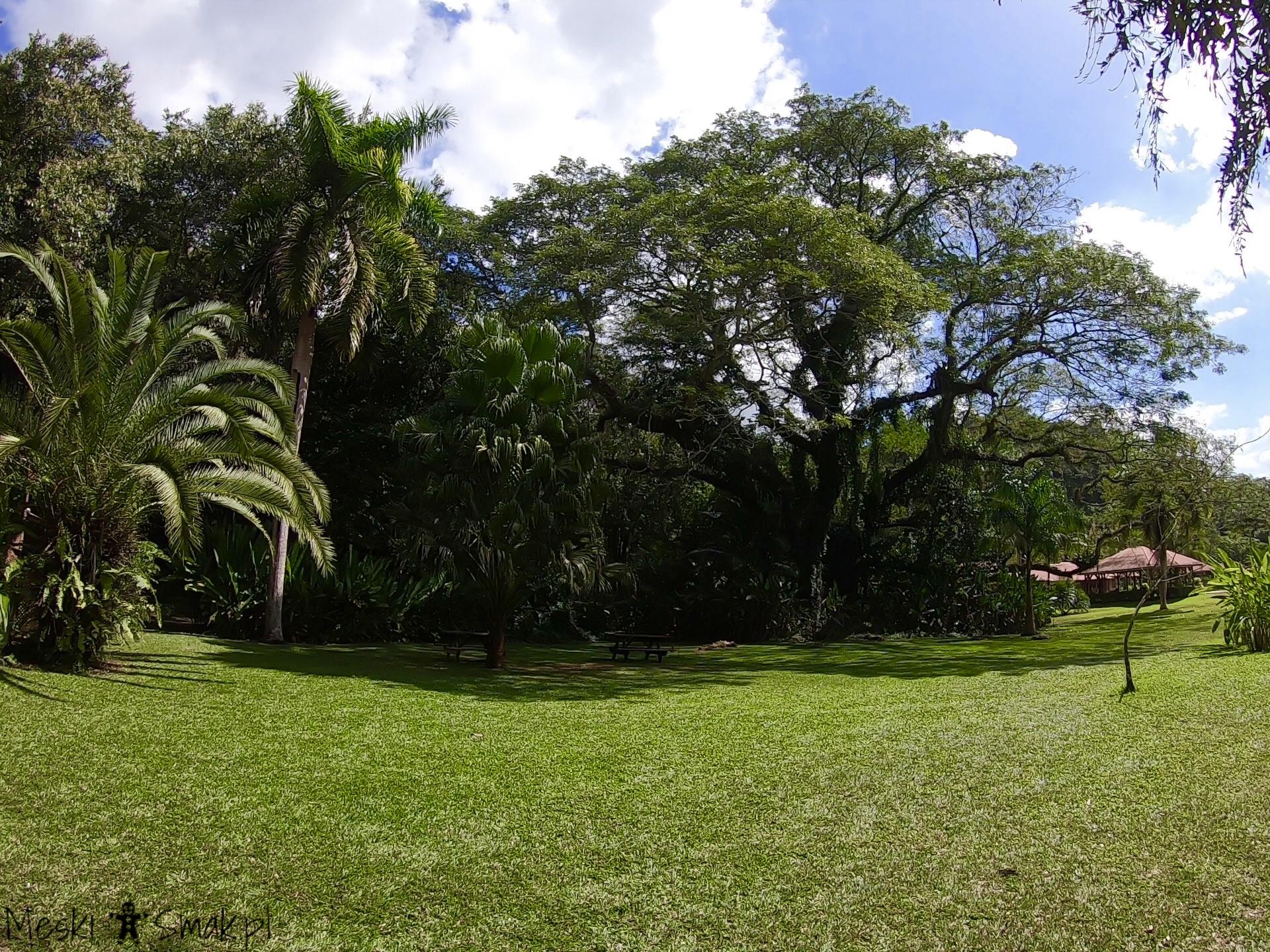 Wakacje i wycieczki Jamajka_wszystko o wodospady YS Falls 3