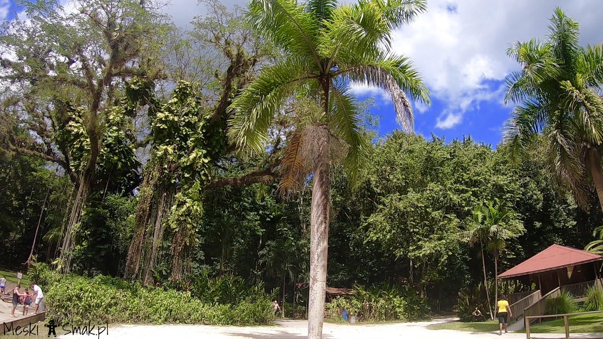 Wakacje i wycieczki Jamajka_wszystko o wodospady YS Falls 6