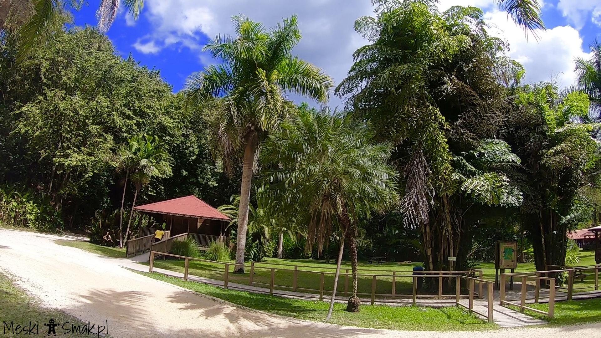 Wakacje i wycieczki Jamajka_wszystko o wodospady YS Falls 7