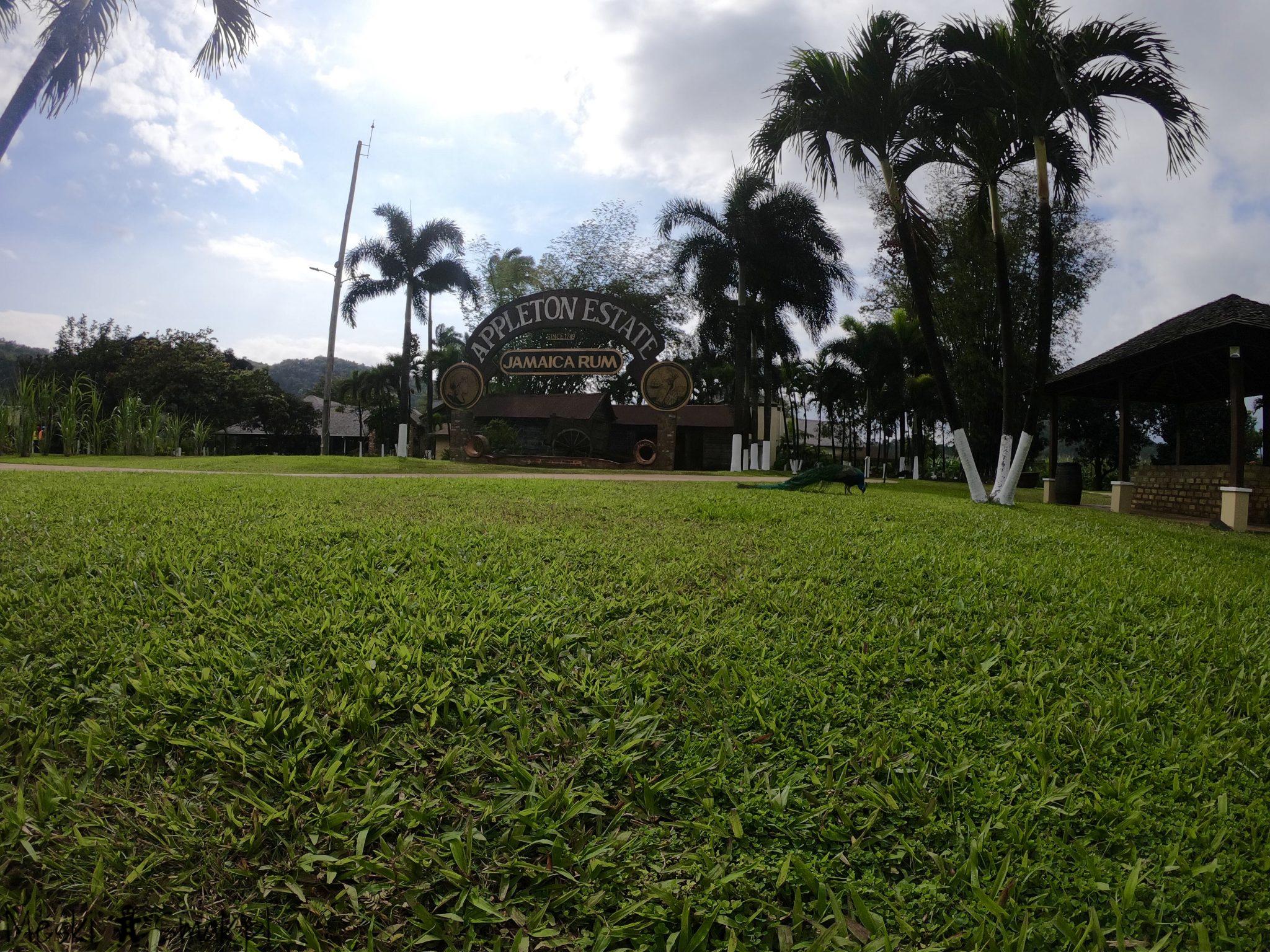 Wakacje i wycieczki Jamajka_wszystko o Fabryka Appleton Estate Rum 6
